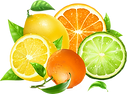 Citrus vector.png