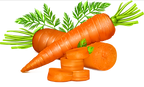 Carrot vector.png