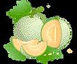 Melon Vector.png