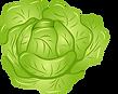 lettuce vector.png