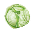 Cabbage Vector.png