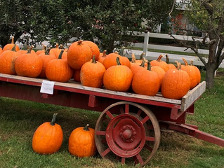 Pumpkin Harvest Weekend