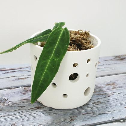 """Pot pour Epiphytes modèle """"pure"""" Moyen"""