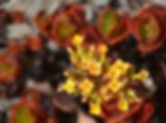 DSC_0132_edited_edited.jpg