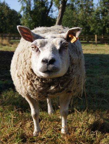 Coucou ! Je m'appelle OLGA_Help Animals - Braîne-Le-Château