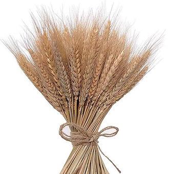 Wheat Stalks 16_