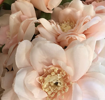 Pale Pink Dahlia.jpg