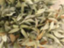 Seeded Eucalyptus Picks 11inch.JPG