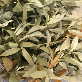 Seeded Eucalyptus Picks