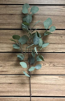 Seeded Eucalyptus Spray 25_