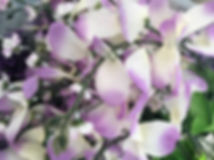 Accent Flowers - Wisteria Lavender.JPG