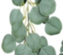 Silver Dollar Eucalyptus Garland Muted 5