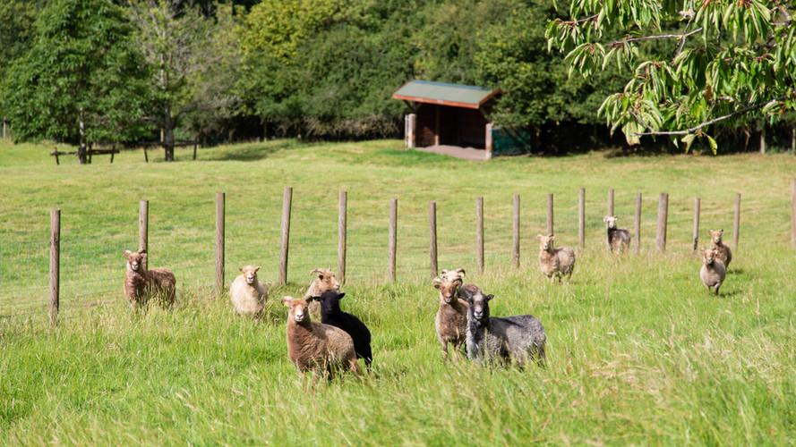 Vobster Farm animals. Sept 2020-14.jpg