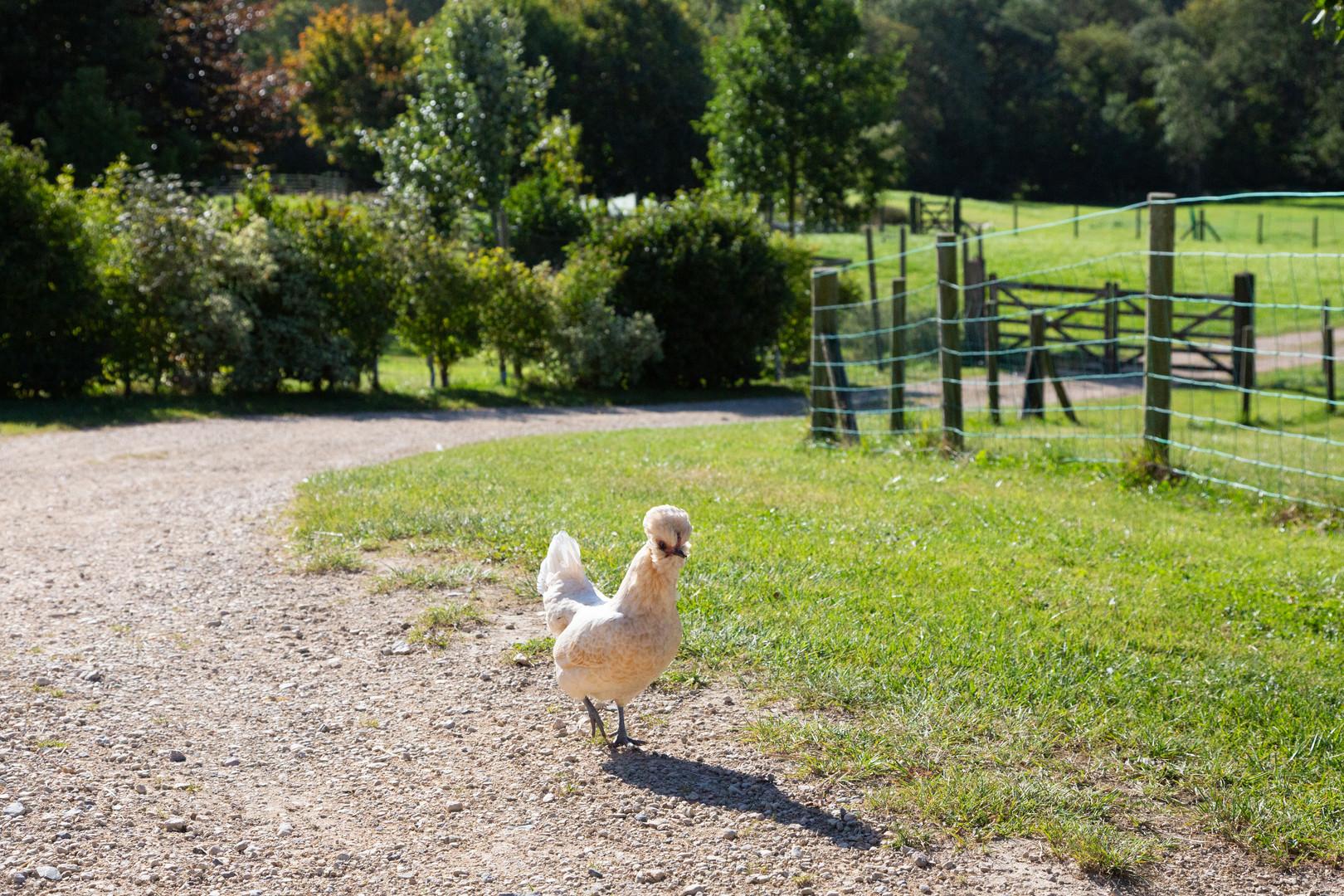 Vobster Farm. Sept 2020-276.jpg
