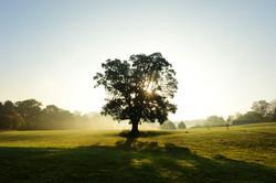 Oak Sun Far Field
