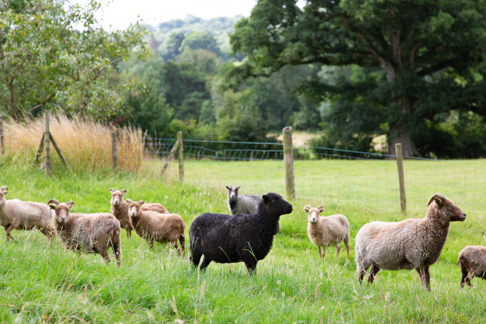 Vobster Farm animals. Sept 2020-21.jpg