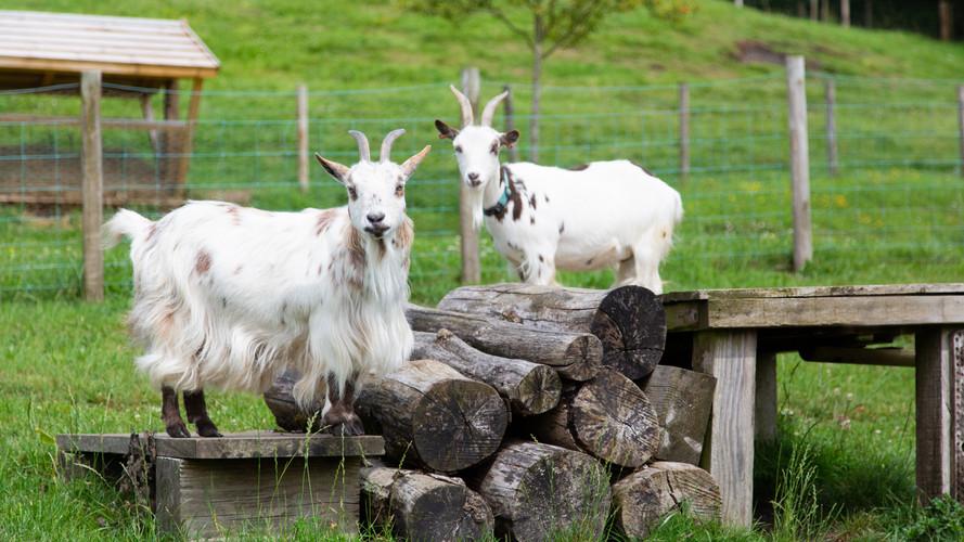 Vobster Farm animals. Sept 2020-57.jpg