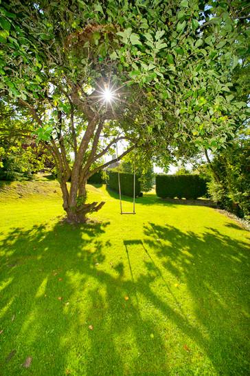 lawn-below-swimming-pool-with-swing_FLA8