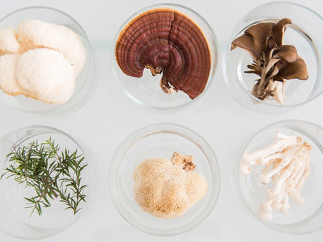 Medicinal Mushrooms: A Supplement For The 21st Century
