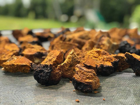 3 Benefits Of Chaga Mushroom That Could Change The Game For Your Health
