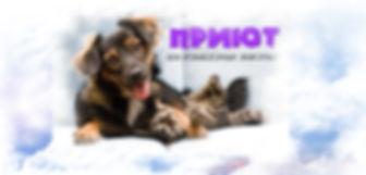 камчатский приют для собак