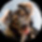 Камчатский Елизовский приют для животных собак и кошек