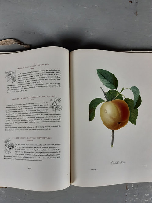 Folio of fruits and flowers