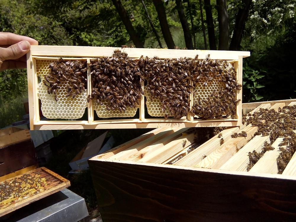 miel en rayon en construction