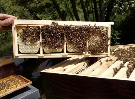Production du miel en rayon.