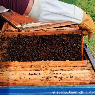 visite_ruche_apiculteur