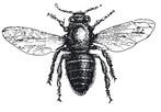 logo apiculteur.ch abeille