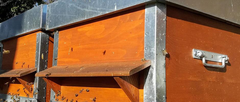 Parrainage de ruche