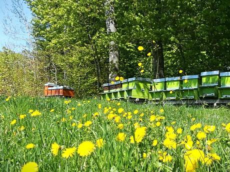 Parrainage de ruche en Suisse