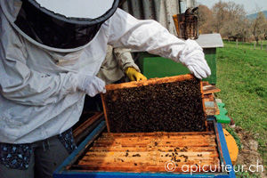 debuter_apiculture.jpg