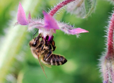 Qu'est ce que le nectar ?