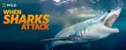 NatGeo Wild When Sharks Attack