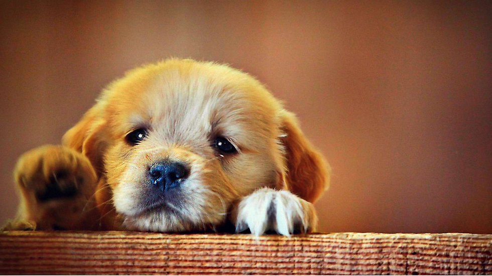 Cute-puppy-Pictures-17.jpg