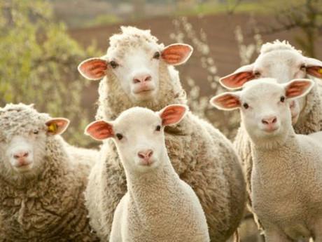 Shepherding 111