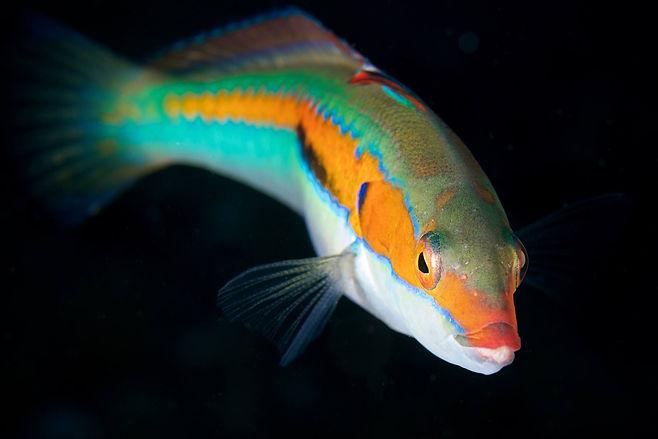 pesce nel servizio di incontri oceanici hjertebanken incontri
