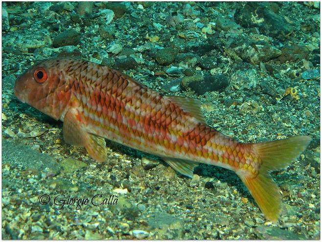 Pesce nel sito di incontri oceanici