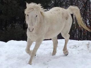 Kahasi enjoying the snow