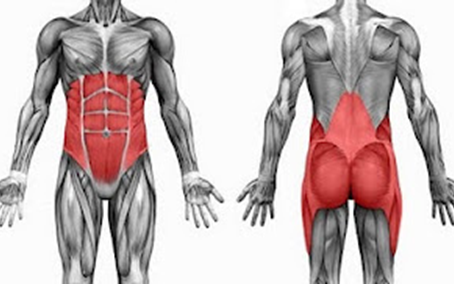 Know your Anatomy: Abs v Core