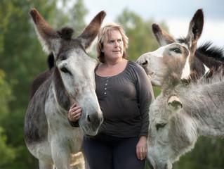 Att rida på åsnor i Dalarna