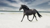 Hästar - något av det vackraste....
