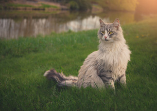 Söt katt vid ån.jpg