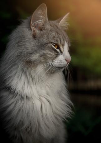 katt vid ån Silverkatten.jpg