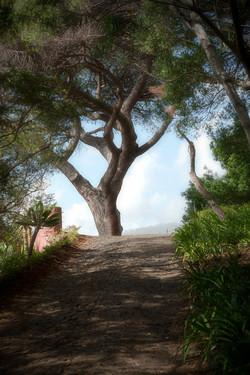 Botaniska trädgården Madeira