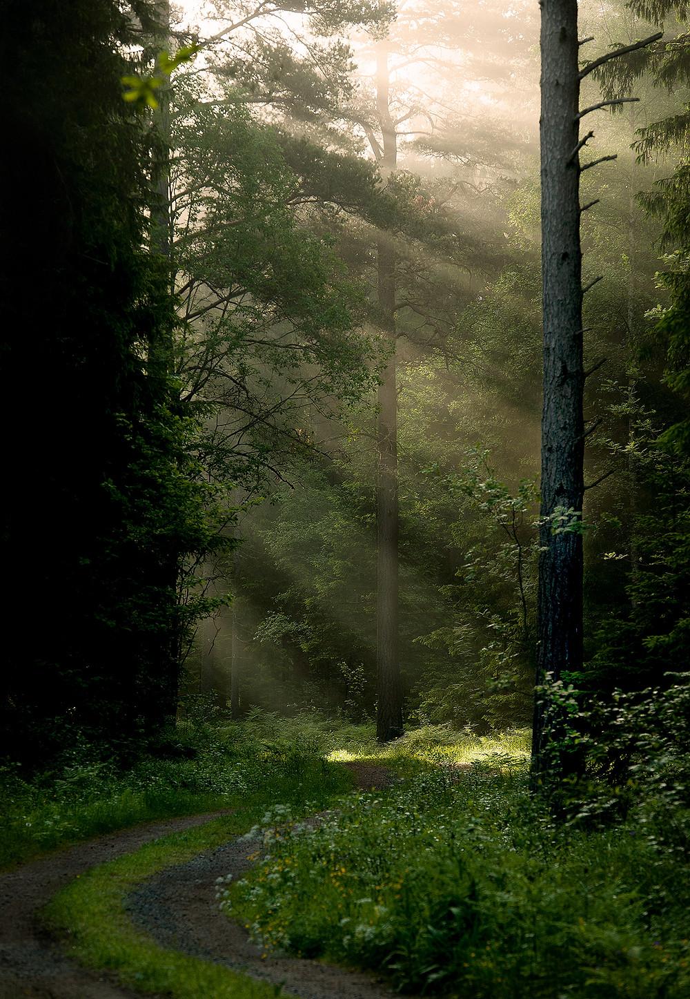 belyst-skogsväg-II.jpg