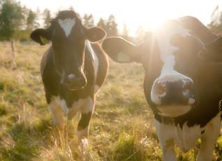 Härliga Hälsingland bland djur, skog och Lill-Babs....