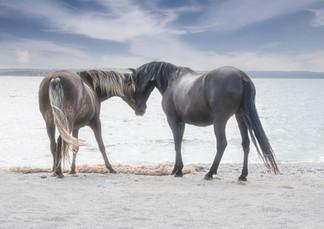 Gotland Furillen hästar som hälsar.jpg